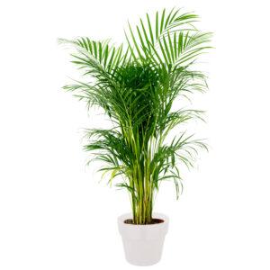 Levande växter